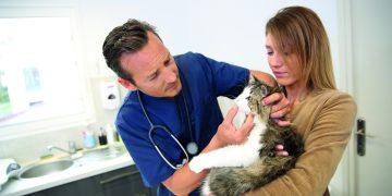 BEDST I TEST: I mange familier er katten en elsket ven. En god og billig katteforsikring kan sikre katten hjælp, hvis den blive syg. GF Forsikring har en fornuftig dækning og er en af markedets billigste ifølge Forbrugerrådet. Foto: GF-arkiv.