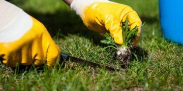 Få ting i haven kræver så meget opmærksom og pleje som netop græsplænen. Når den gror, skal den klippes, og mellem klipninger er der blandt andet gødning, lugning og eftersåning, som sikrer det perfekte grønne dække. Foto: PR.